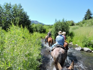 Walking through the creek to cool off the horses