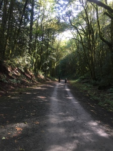 One of Washington's picturesque trails